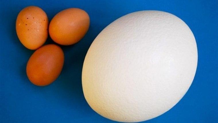 Kalsiyum bakımından zengin: Deve kuşu yumurtasının faydaları nelerdir? Nasıl tüketilir?